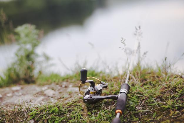 łowienie ryb staw